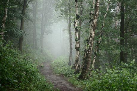 Bergischer Regenwald