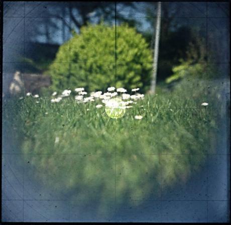 Gänseblümchen auf Matschscheibe