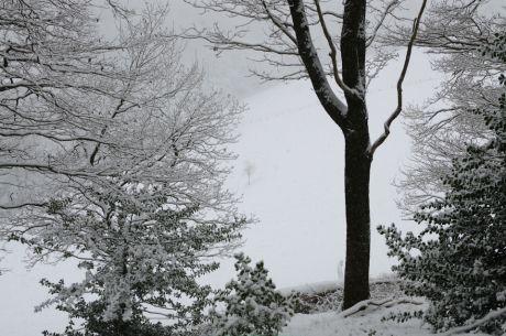 Schnee auf der Rodelwiese