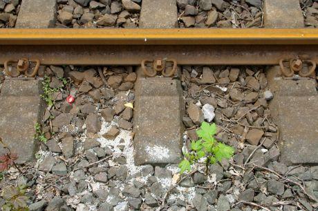 Rostiges Gleis mit aufstrebender Natur