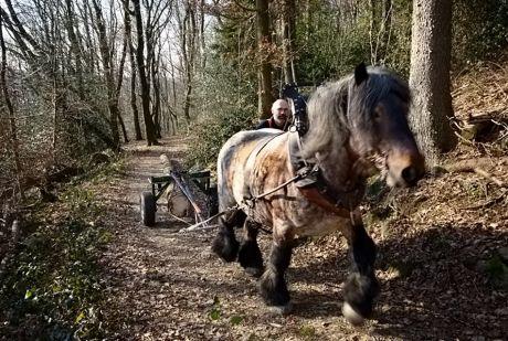 """Zwei bei der Arbeit im Wald: Rückepferd """"Oscar""""mit Rückekarre """"Marianne"""" und Stephan gibt den Ton an"""