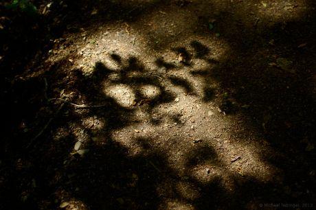 Schattenspiel im Wald