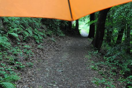 Mit dem Regenschirm im Wald unterwegs
