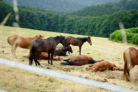 Pferdewache
