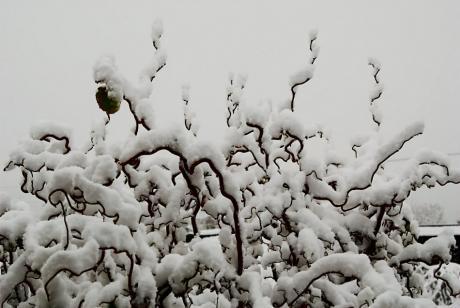 Schnee-20081203