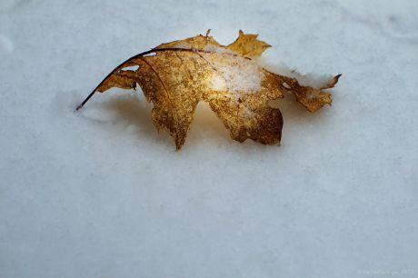 verstorbenes Blatt an gefrorenem Wasser