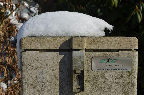Schneeotter beim Sonnenbad