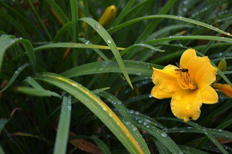 Pflanzen gedeihen derzeit prächtig