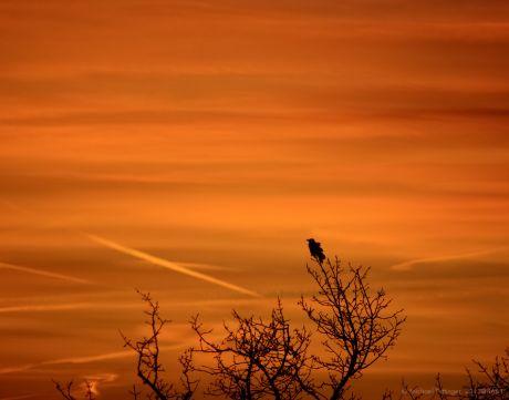 Auch Vögel haben einen romantischen Tick: kurz vor Sonnenaufgang hocken sie in den Baumwipfeln