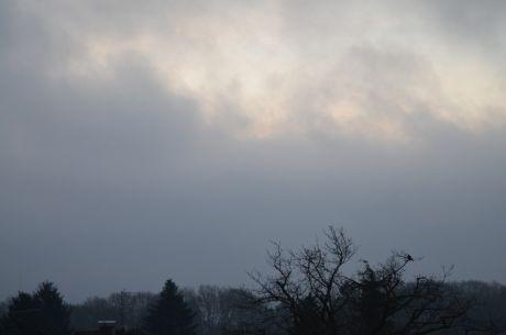 Kurz vor Sonnenaufgang: der Piepmatz sitzt und schaut