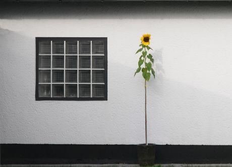 Sonne an Blume