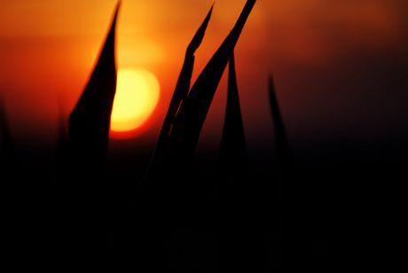 Sunset vor einem Jahr: in Erinnerung an eine lang gepflegte Tradition