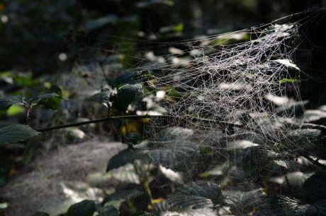 chaotisches Spinnennetz