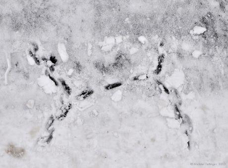 Spuren am Boden: ob von einem Höhlenmenschen, ist nicht überliefert