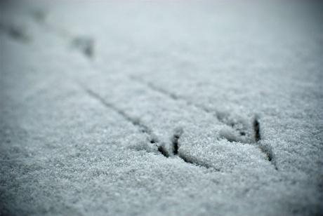 Spuren um Schnee