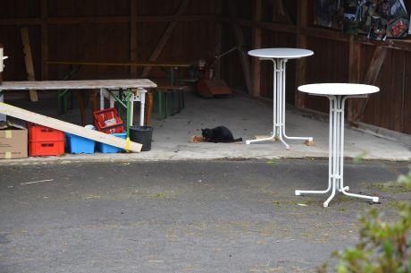 Tatortreiniger: Während die Zweibeiner noch ruhen, ist der Vierbeiner schon aktiv