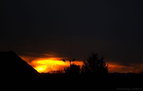 Tauben mögen auch den Sonnenaufgang