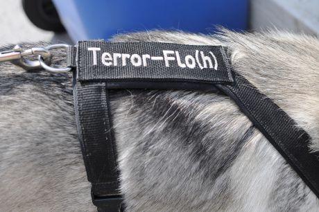 Terror-Flo(h)