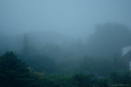 The Fog: am Abend kriecht die Feuchtigkeit aus allen Ritzen auf