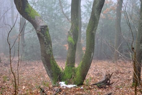 Der W-Baum