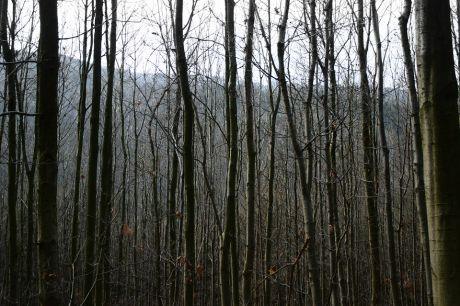 Die fehlenden Blätter bedecken den Waldboden
