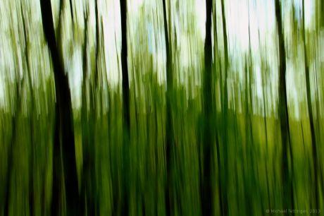 Geschüttelt, nicht gerührt: Waldimpression