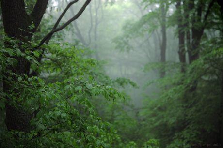 Wald-Impression