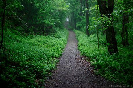 Der Wald wächst zu: Langsam mutiert der Ausflug in die Natur zu einer Indoor-Veranstaltung