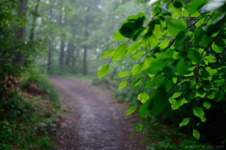 Nebel im grünen Wald