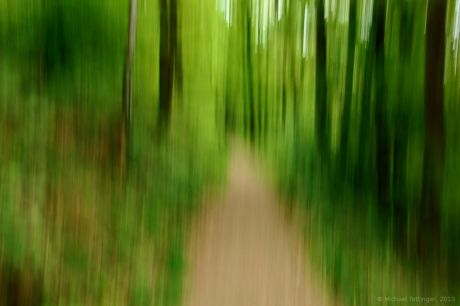 Wald im Aufwind: Kunst oder Spielerei mit der Kamera?