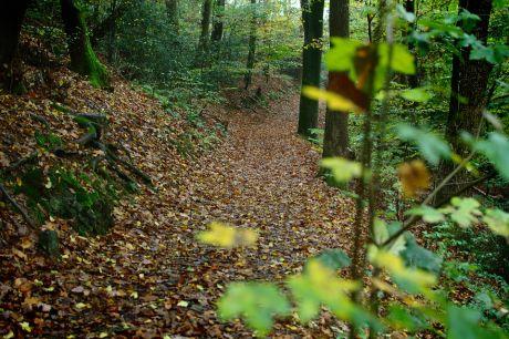 Der Herbst zieht mächtig ein