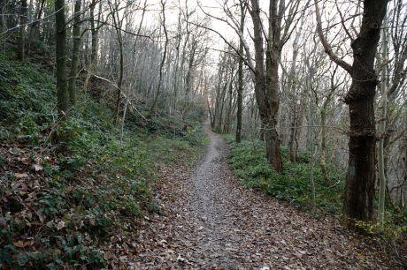 Wald ohne Blätterdach