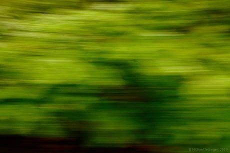 Geschüttelter Wald