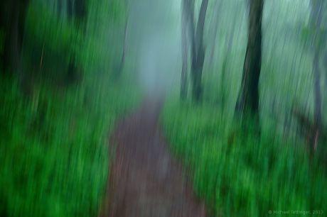 Geschüttelte Waldimpression