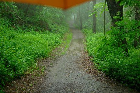 Waldweg mit Regenschirm