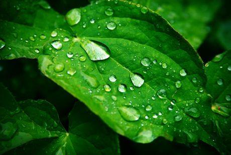 Regen an Grün