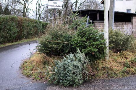 Zusammenrottung von ausgesetzen Weihnachtbäumen