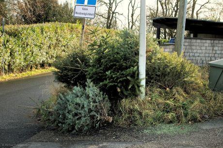 Haufen von ausrangierten Weihnachtsbäumen: am 7. Januar