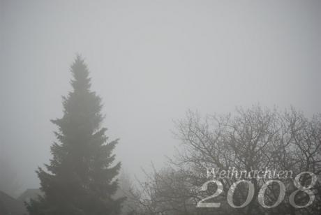 Nadelbaum: im Nebel