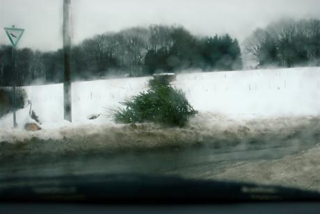verbrauchter Weihnachtsbaum: am Straßenrand