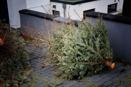 Toter Baum: man nannte es mal Weihnachtsbaum
