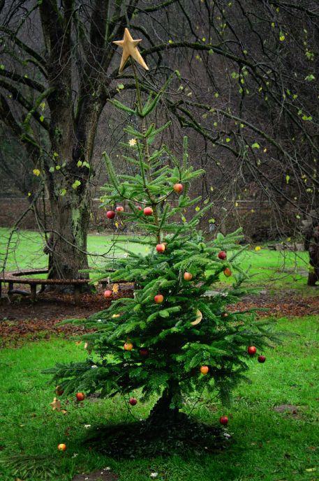 Weihnachtsbaum vor dem Balkhauser Kotten