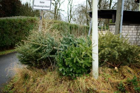 Ansammlung von ausgestoßenen Weihnachtsbäumen