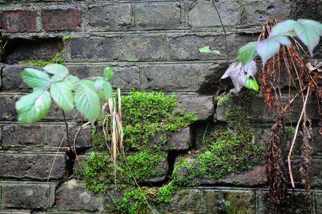 Natur erobert die Bahn zurück: am Pohligshof